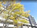 66 Ashmore Street, Erskineville, NSW 2043