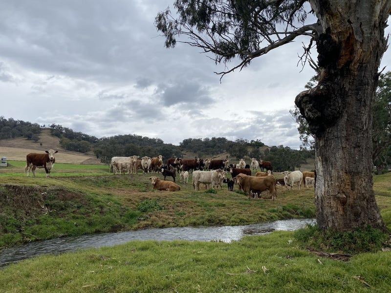 512 Ogunbil Road, Dungowan, NSW 2340